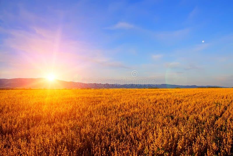 Nascer do sol no campo fotos de stock royalty free