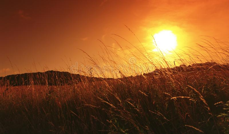 Nascer do sol no campo de trigo na região de ÃŽle de França imagem de stock royalty free