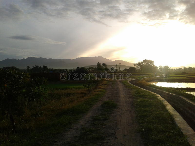 Nascer do sol no campo do arroz imagens de stock