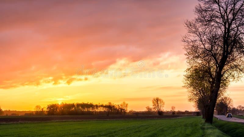 Nascer do sol no campo e na árvore fotografia de stock