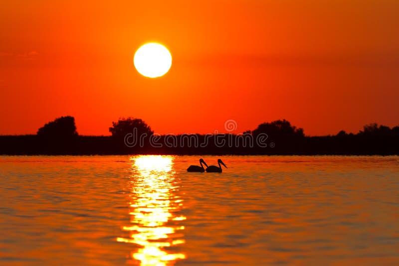 Nascer do sol no delta de Danúbio foto de stock royalty free