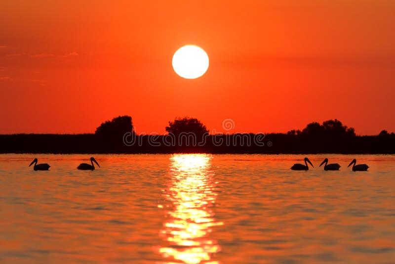 Nascer do sol no delta de Danúbio imagem de stock