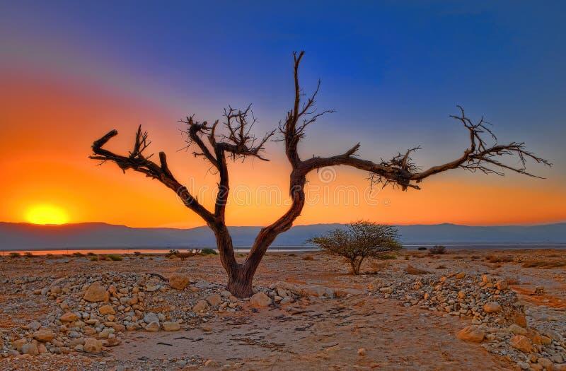 Nascer do sol no deserto imagens de stock royalty free