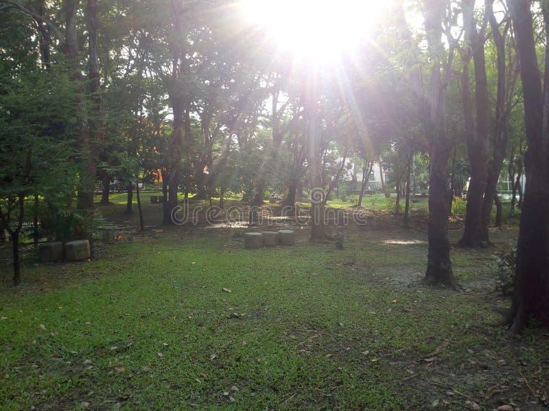 Nascer do sol no jardim Opinião 2 da largura foto de stock royalty free