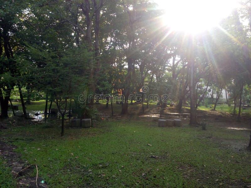 Nascer do sol no jardim Opinião da largura imagens de stock royalty free