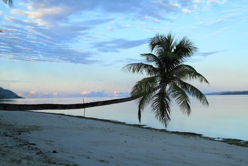 Download Nascer do sol no mar imagem de stock. Imagem de árvore - 65576631