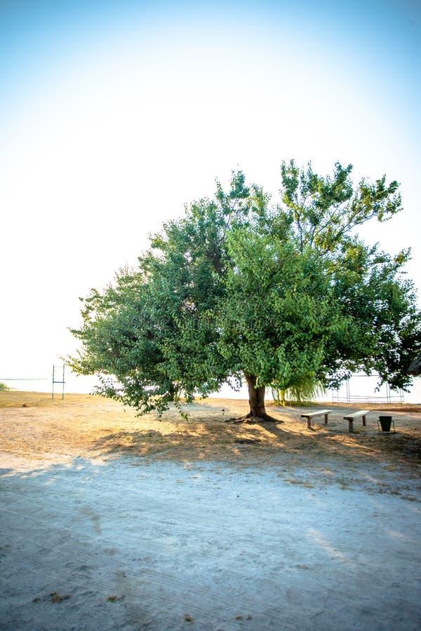Nascer do sol no mar pequeno com árvore sozinha imagens de stock