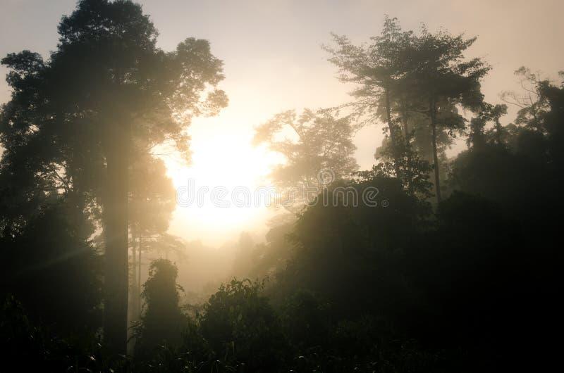 Nascer do sol no vale de Danum fotografia de stock royalty free