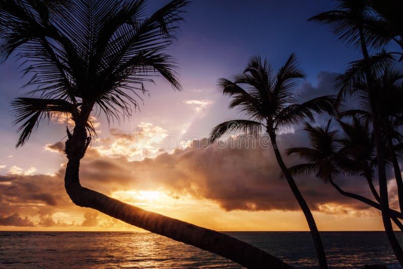 Nascer do sol ou por do sol tropical no Palm Beach fotografia de stock