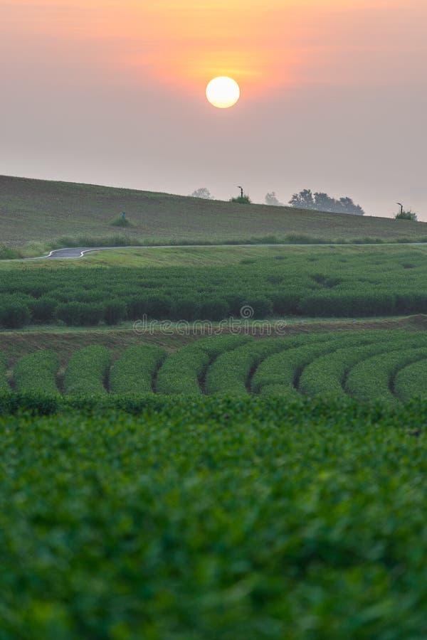 Nascer do sol sobre a curva da exploração agrícola do chá verde, província de Chiang Rai, Tailândia fotos de stock royalty free