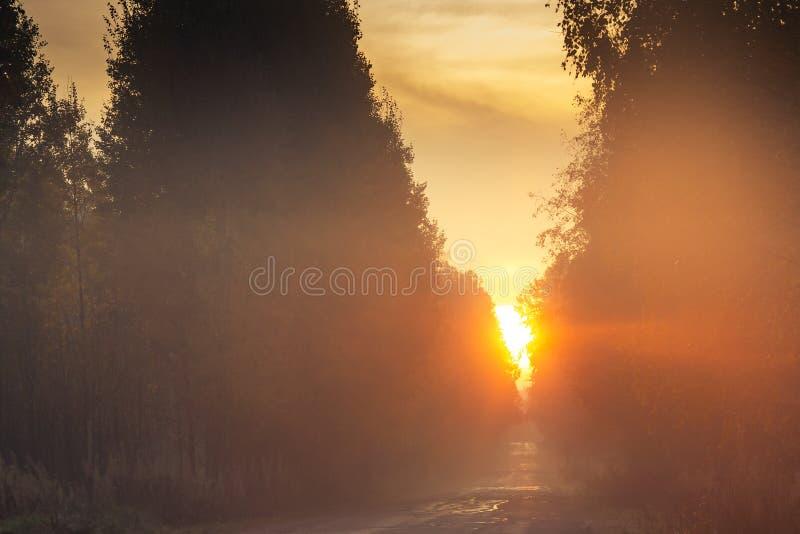 Nascer do sol sobre a estrada na floresta do outono imagens de stock