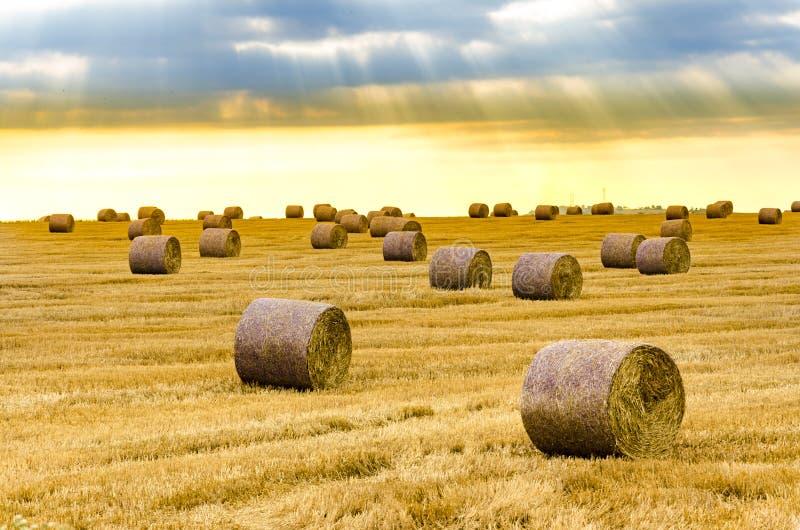 Nascer do sol sobre o campo de exploração agrícola com pacotes de feno imagens de stock