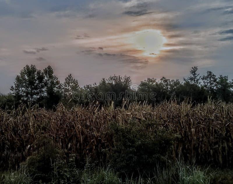 Nascer do sol sobre o campo de milho imagens de stock