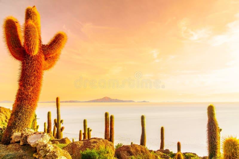 Nascer do sol sobre o lago de sal de Uyuni da ilha Incahuasi em Bolívia imagem de stock royalty free