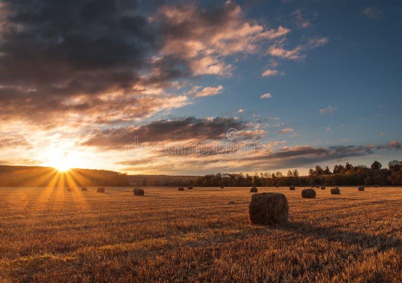 Nascer do sol sobre um campo com muitos pacotes de feno outono, Rússia foto de stock