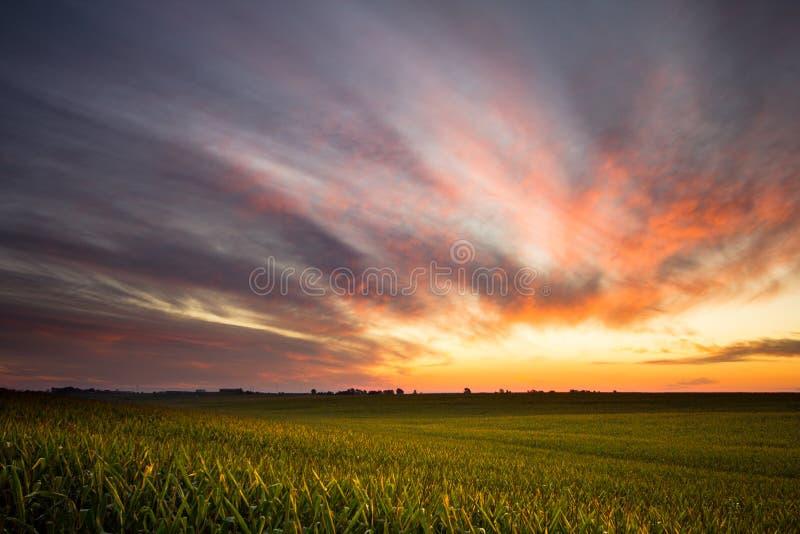 Nascer do sol sobre um campo de milho foto de stock