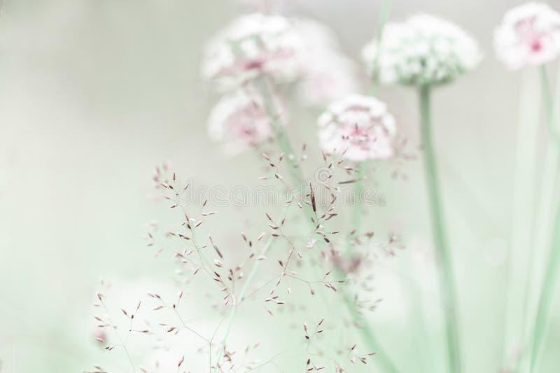 Nascer do sol surpreendente no prado do verão com wildflowers fotografia de stock royalty free