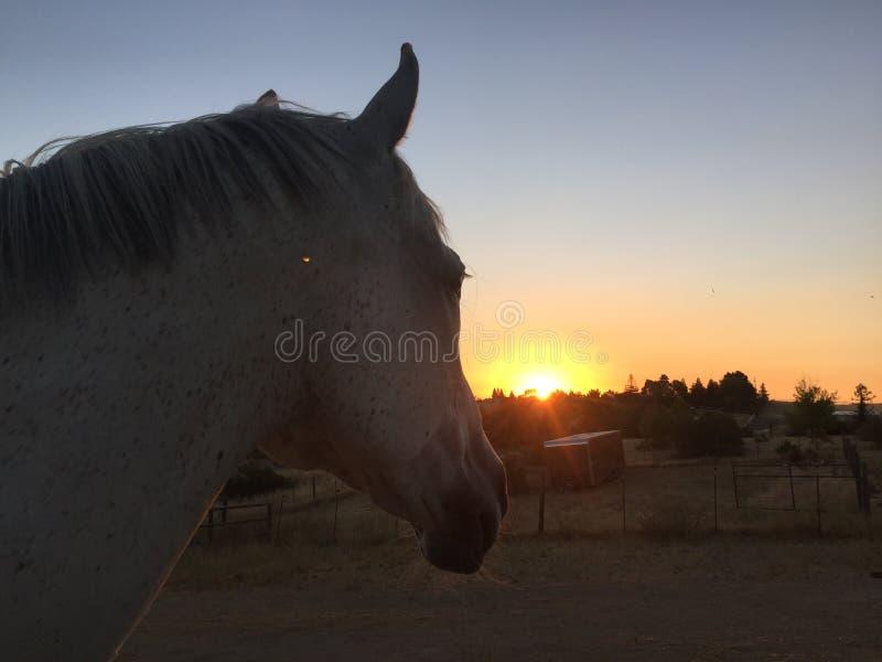 Nascer do sol do verão de Paso Robles com cabeça de cavalo fotos de stock