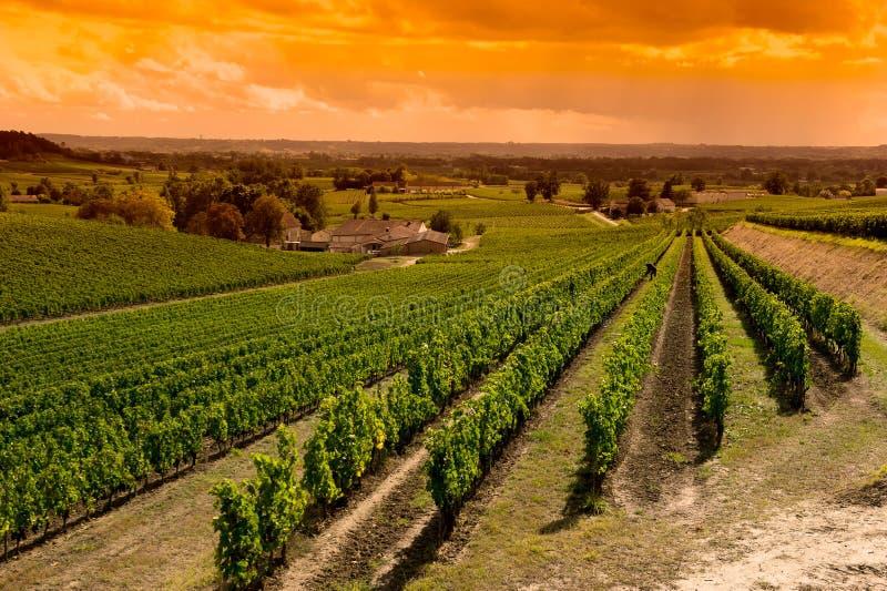 Nascer do sol-vinhedos de Saint Emilion, vinhedos do vinhedo do Bordéus imagem de stock royalty free