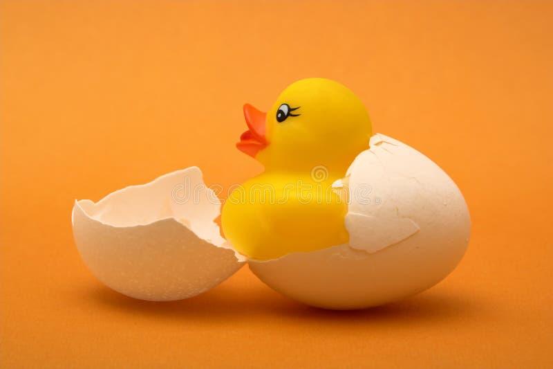 Nascimento do pato de borracha fotos de stock