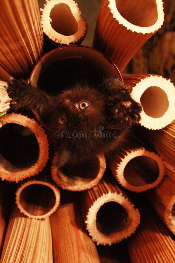 Nascita di un gattino fotografia stock libera da diritti