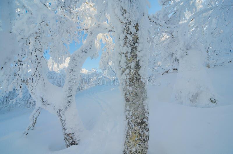 Nascondendosi nella foresta della neve fotografie stock