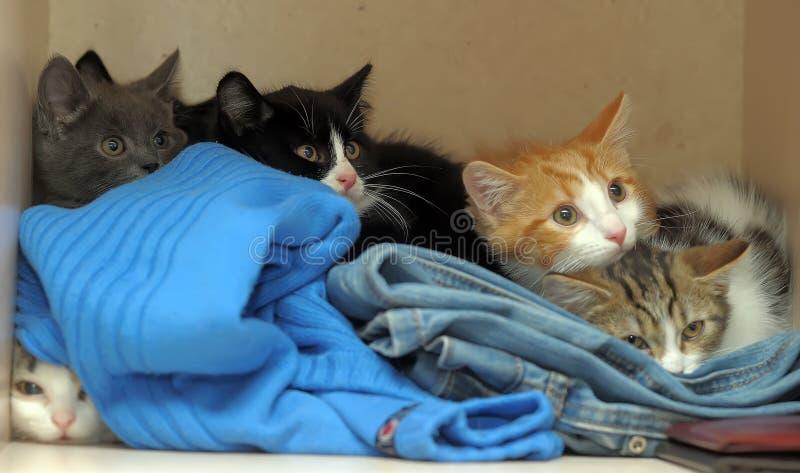 Nascondersi spaventato dei gattini fotografie stock libere da diritti