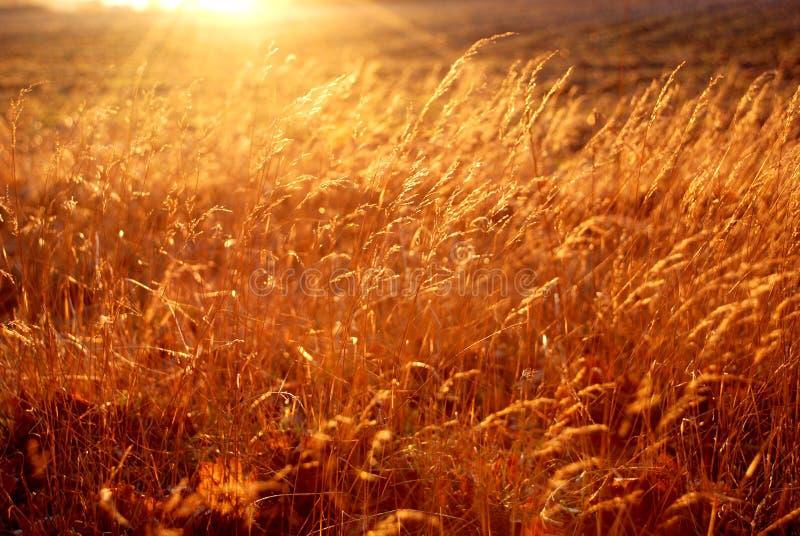 Nascosto nell'erba fotografia stock libera da diritti