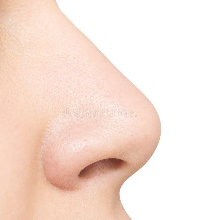 Nase lokalisiert auf Weiß lizenzfreies stockbild