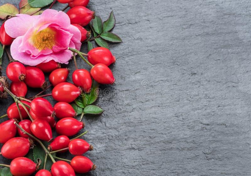 Naselli di rosa rosso maturo su fondo di grafite grigia Vista dall'alto fotografia stock libera da diritti