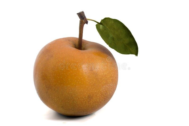 Nashi pear. One Nashi pear isolated on white royalty free stock photo