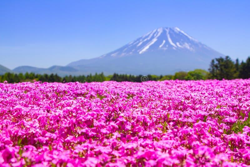 NASHIYAMA, JAPÃO maio de 2015: Os povos do Tóquio e outras cidades vêm ao Mt Fuji e aprecia a flor de cerejeira na mola cada ano imagens de stock