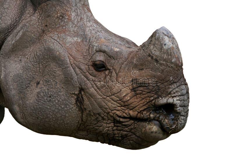 Nashorn-Gesicht lizenzfreie stockfotos