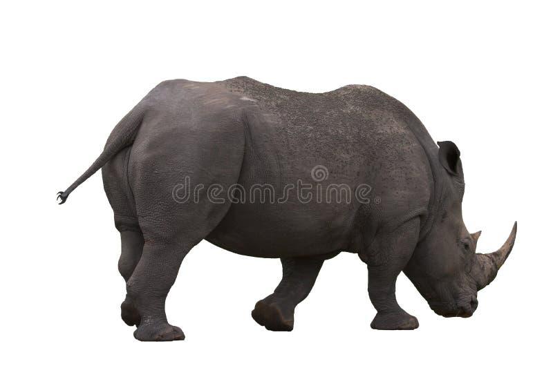 Nashorn getrennt stockfoto