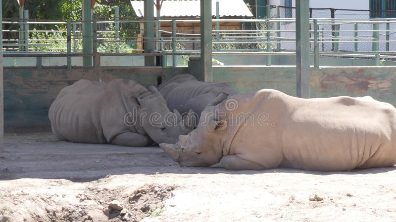Nashorn im Zoo stockbilder