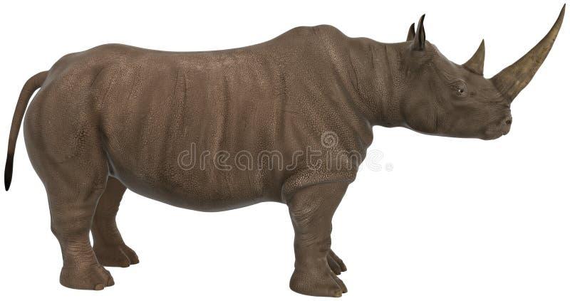 Nashorn, Nashorn, wild lebende Tiere, Illustration lizenzfreie abbildung