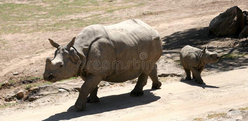 Nashornfamilie stockfoto