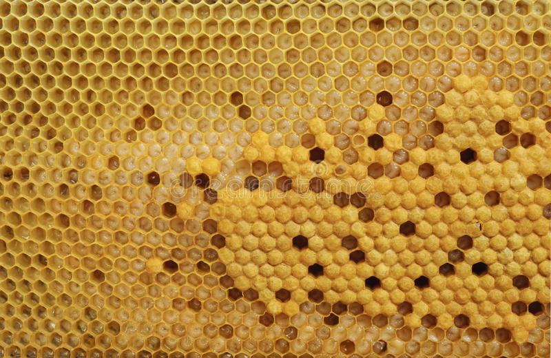 Nasiadowe komórki miodowa pszczoła zdjęcie royalty free
