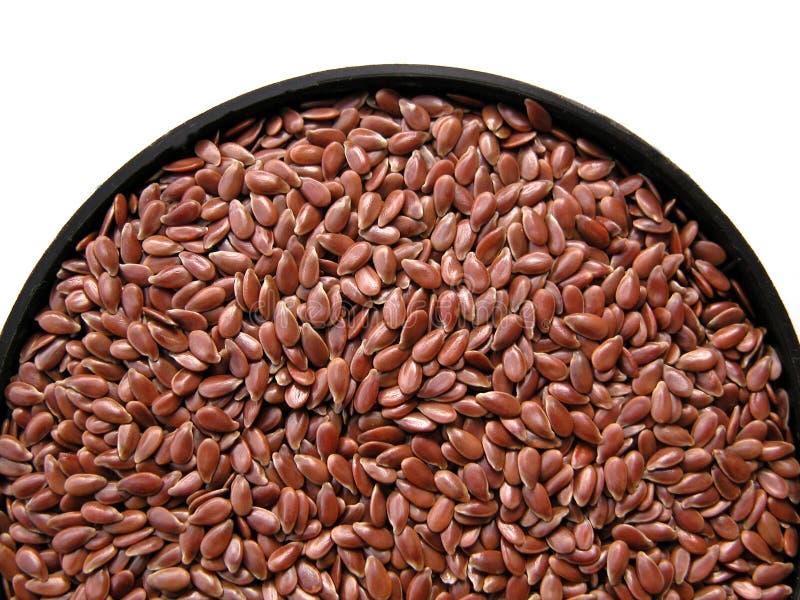 nasiona kanarowi zdjęcia stock