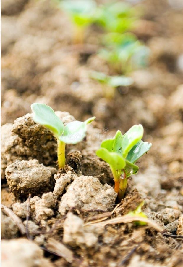 nasiona rosnącego makro fotografia stock