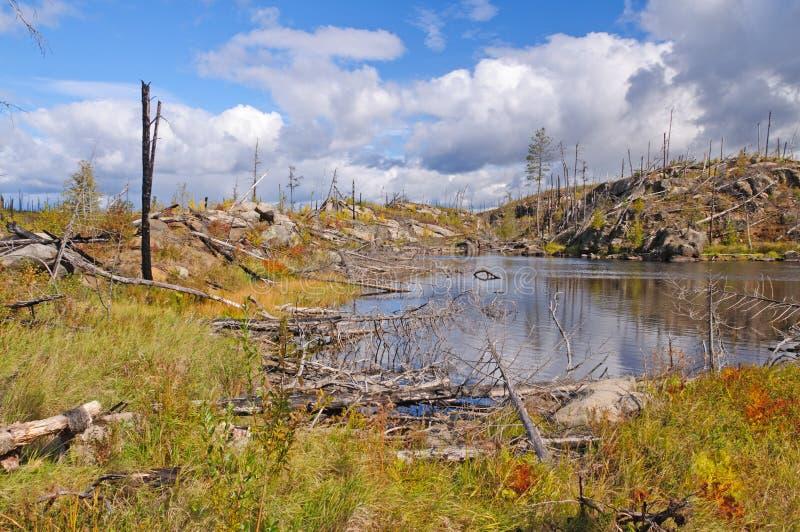 Nasleep van een brand in de wildernis royalty-vrije stock foto's