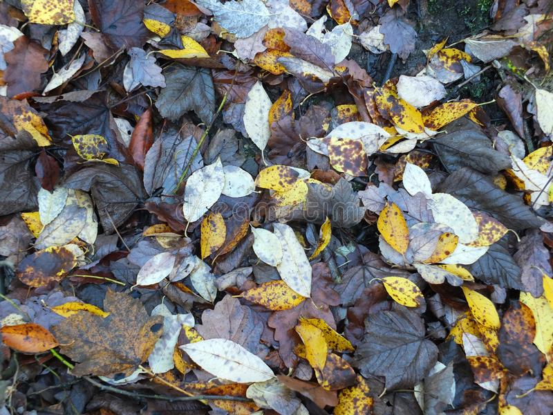 Nass gefallene tote Blätter aus den Grund in den Brauntönen und Gelb in vollen backgeouns Rahmen des Spätherbsts lizenzfreie stockbilder