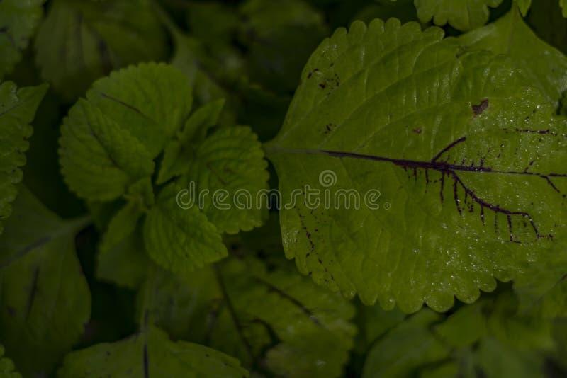 Nass grüne Blätter mit den Wassertröpfchen sichtbar stockbild