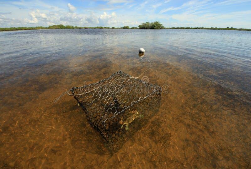 Nassa per granchi con il granchio nel suono di Barnes, Florida immagini stock