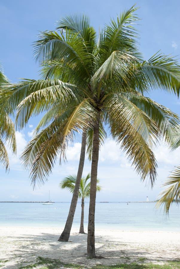 Nassau de Palmen van het Stadsstrand royalty-vrije stock foto's