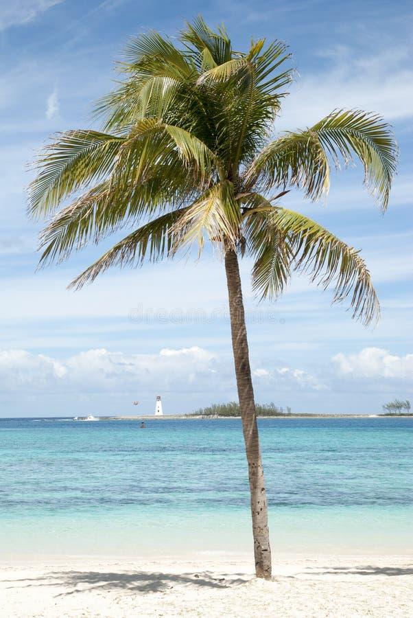 Nassau palmträd royaltyfri fotografi