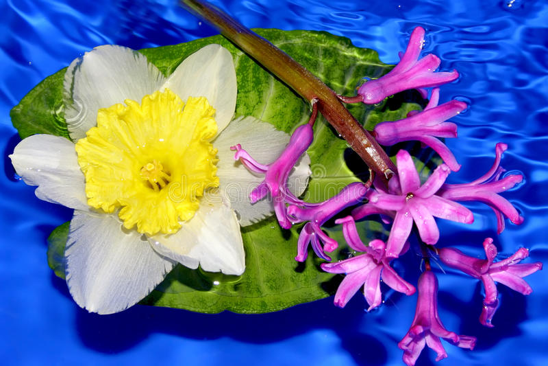 Nasse Blumen der magentaroten Glockenblume lizenzfreies stockbild
