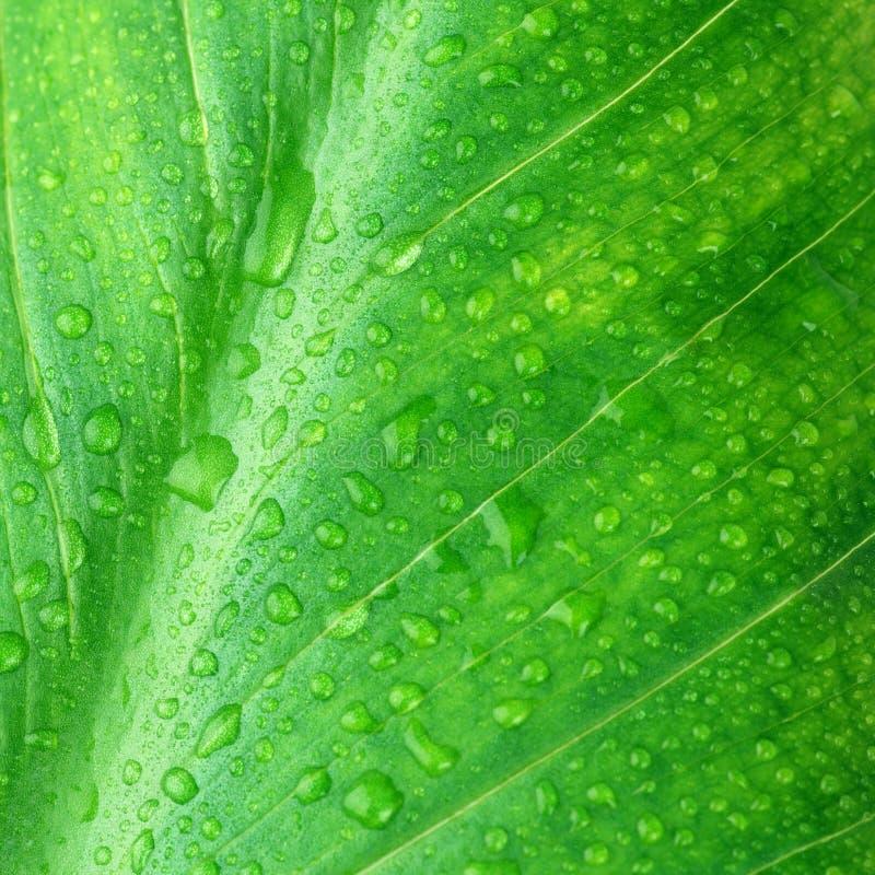 Nasse grüne Blattnahaufnahme lizenzfreie stockfotos