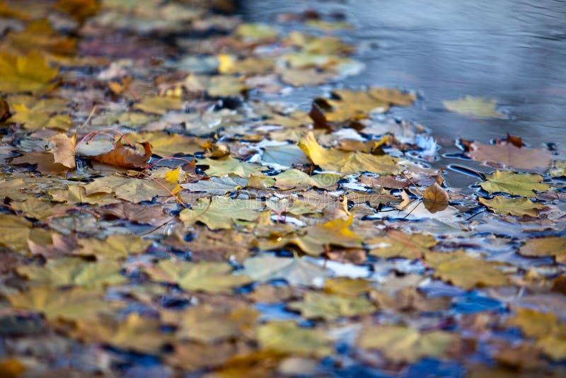 Nasse Herbst-Blätter stockfotos