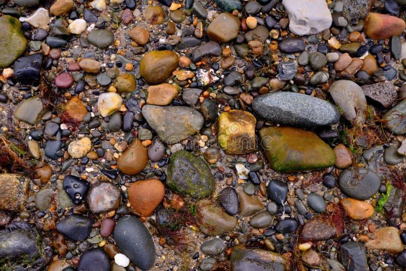 Nasse Steine mit etwas Meerespflanze auf dem Strand lizenzfreies stockfoto